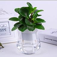 办公室水培花卉四季常青绿植