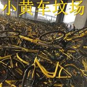 """北京惊现共享单车""""坟场"""""""