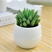 喜艾 办公桌面吸甲醛小绿植盆景