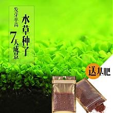 米熊水草种子
